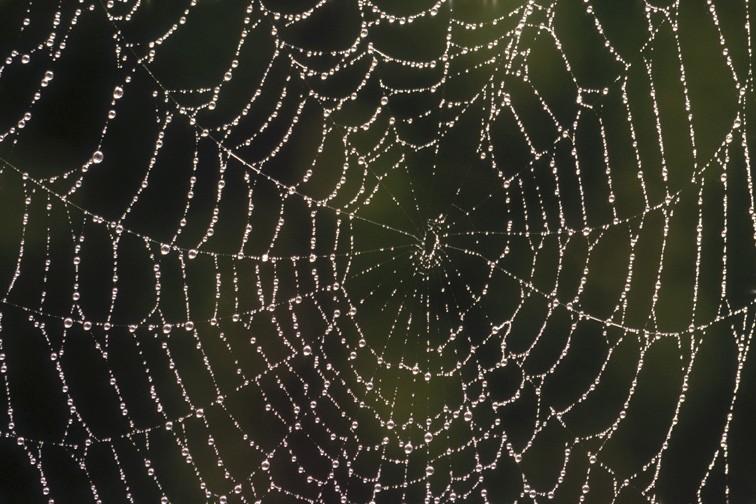 Rosée sur une toile d'araignée