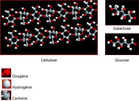 Les molécules constitutives des êtres vivants